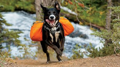 Photo of Top 10 Best Dog Backpack in 2021 Review