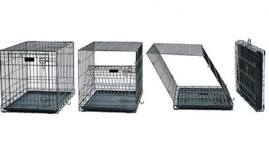 Photo of Top 10 Best Dog Crates in 2020 Reviews